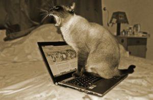 Gatto urlante