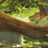 mappa profili fantasy